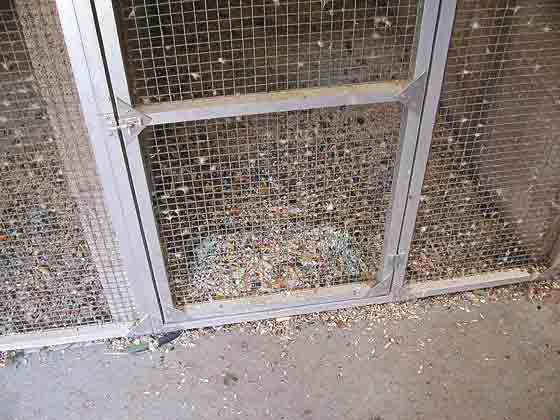 The husbandry of an aviculture facility is best observed firsthand