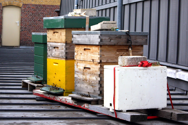 Bee Houses at Vooruit in Ghent