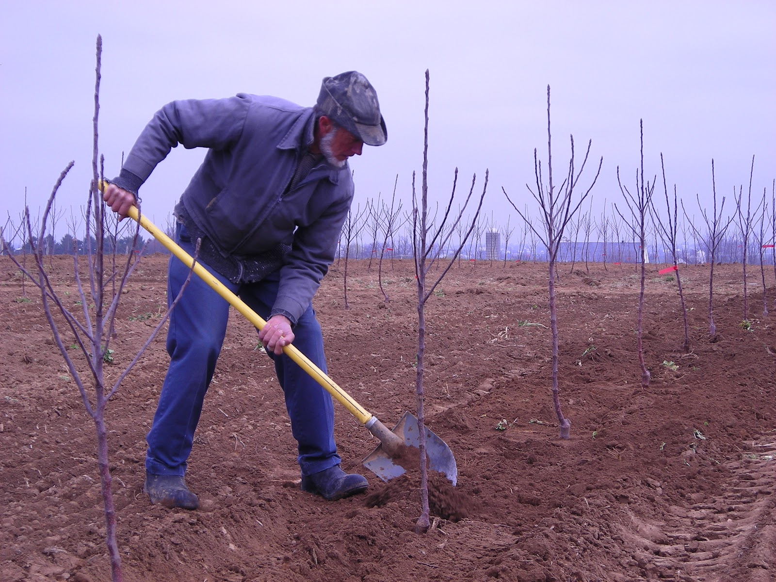 Habits of Growth and Productivity - Journal of an Orchardist