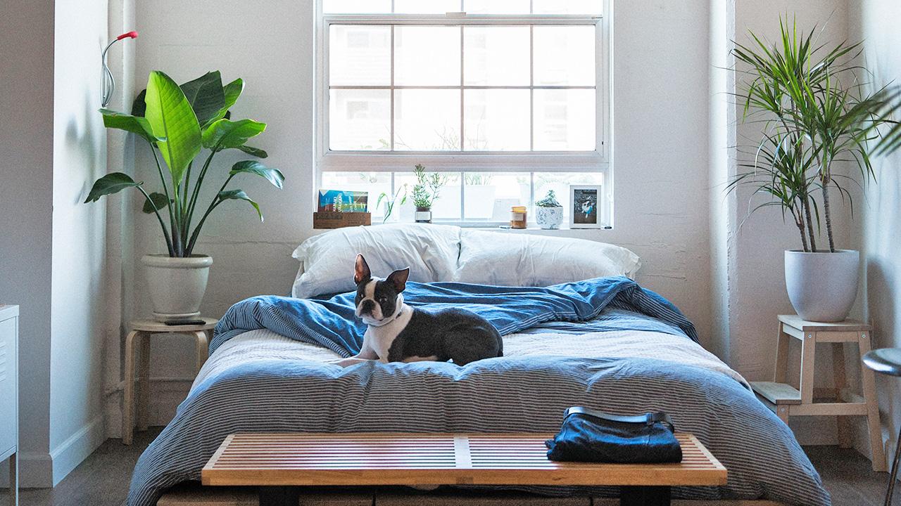 Dog sat on bed