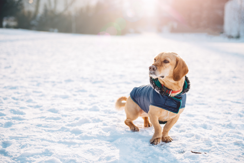 3 Tips for Keeping Your Dog Safe This Winter