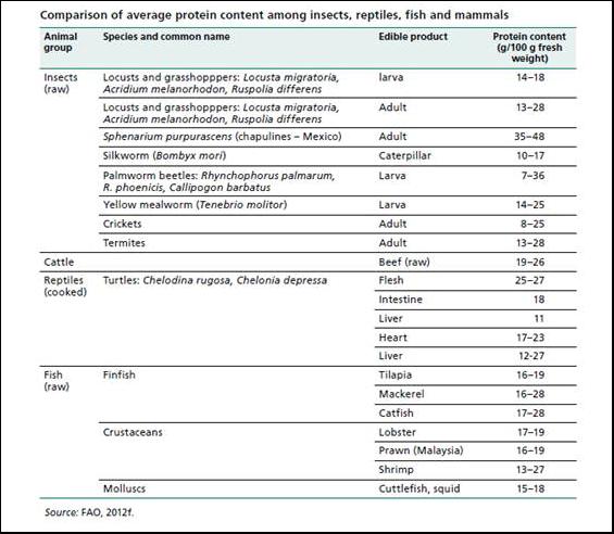 Comparaison de la quantité de protéine contenue chez certains insectes, reptiles, poissons et mammifères.