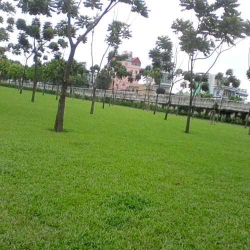 Tiến hành trồng loại cỏ phù hợp với nhu cầu