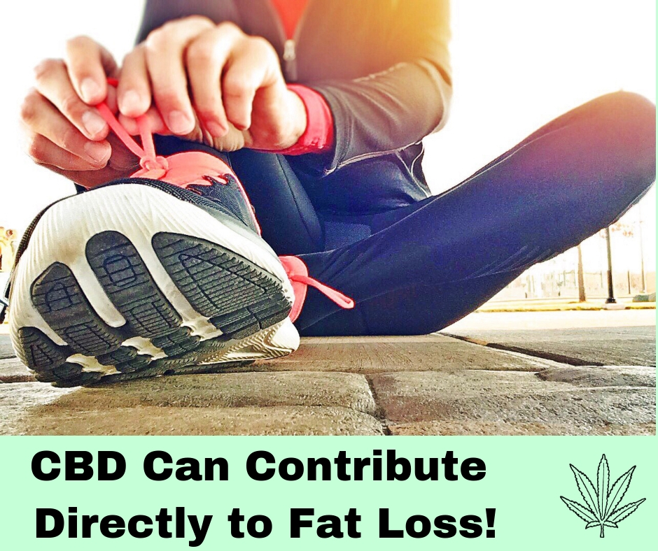 cbd for obesity