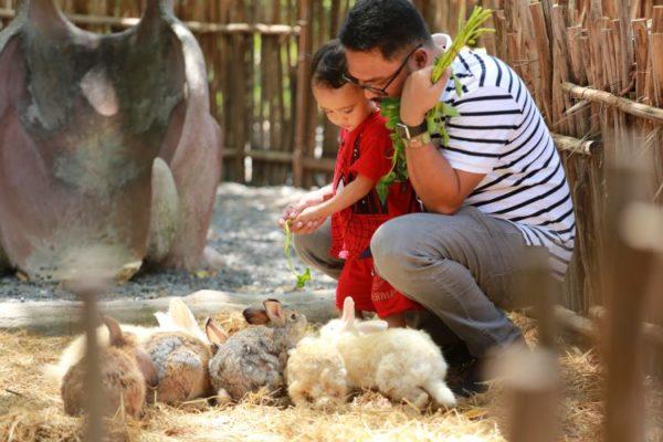 girl playing with rabit in petting zoo