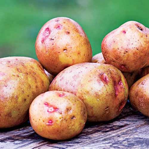 Red-Gold-Potatoes.jpg