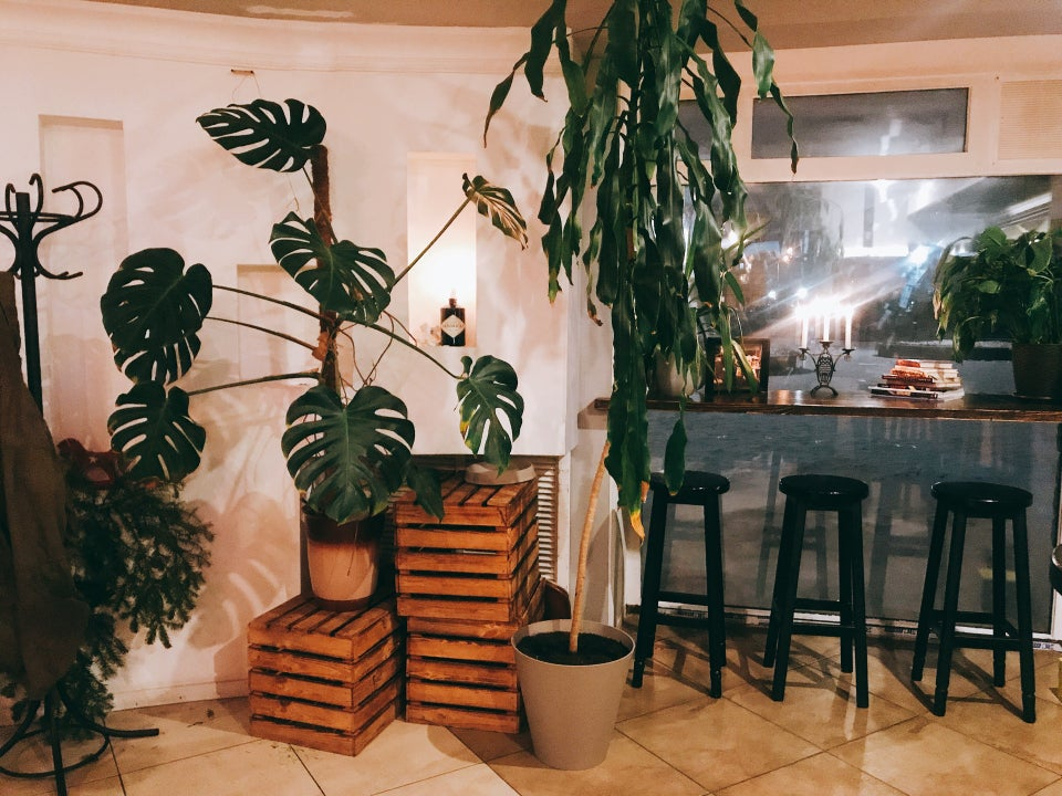 Зелені рослини в інтер'єрі
