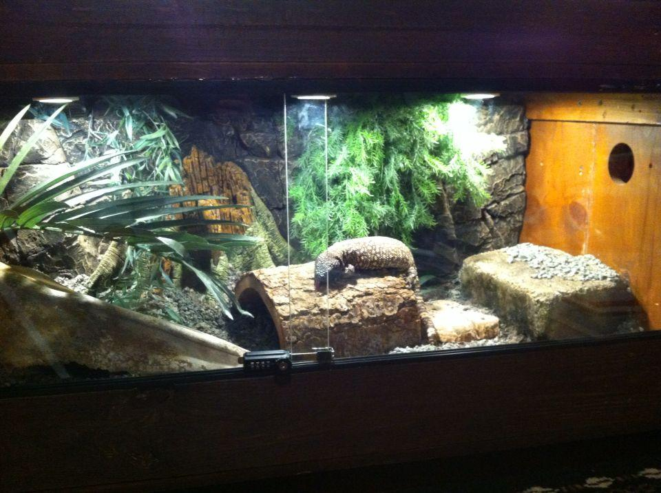 Image result for mexican beaded lizard cage