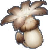 Nấm Rơm Gió - Philanemo Mushroom