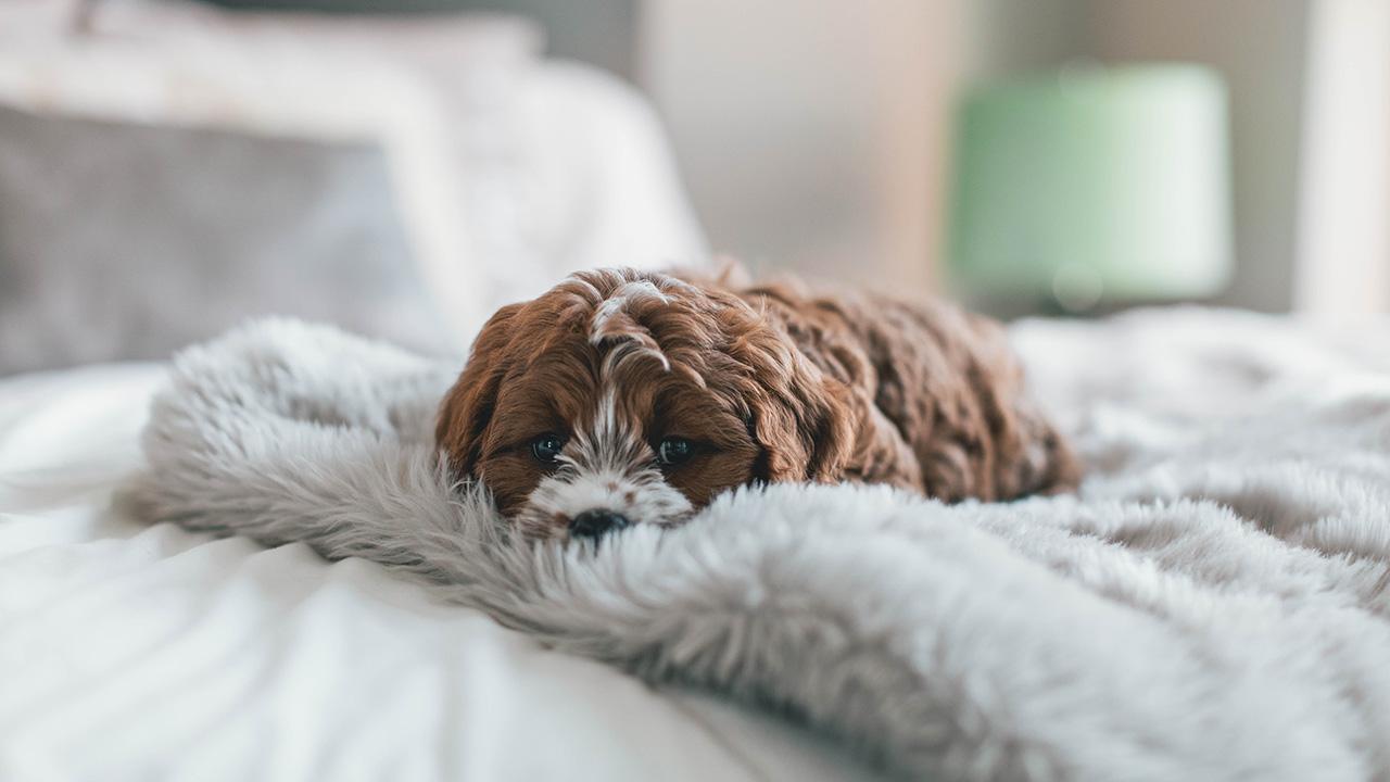 Dog sleeping on bed