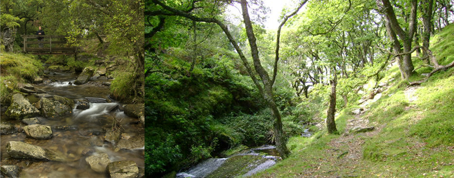 Devon is filled with an abundance of woodland walks which are a perfect autumn time activity.
