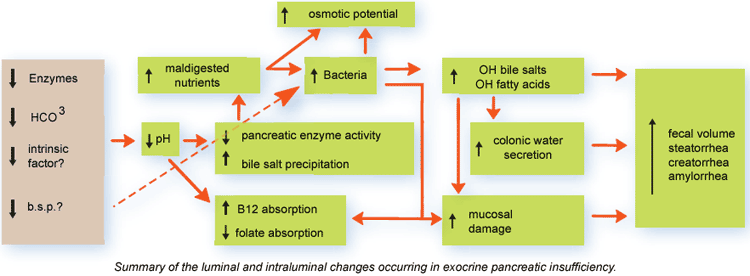 Pathophysiology of exocrine pancreatic insufficiency