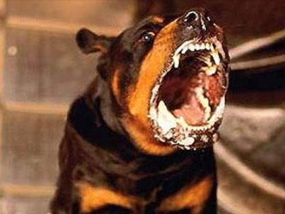 Проводится бесплатная вакцинация кошек и собак Стерлитамакск…