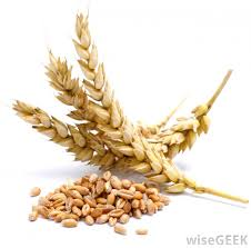 Image result for wheats