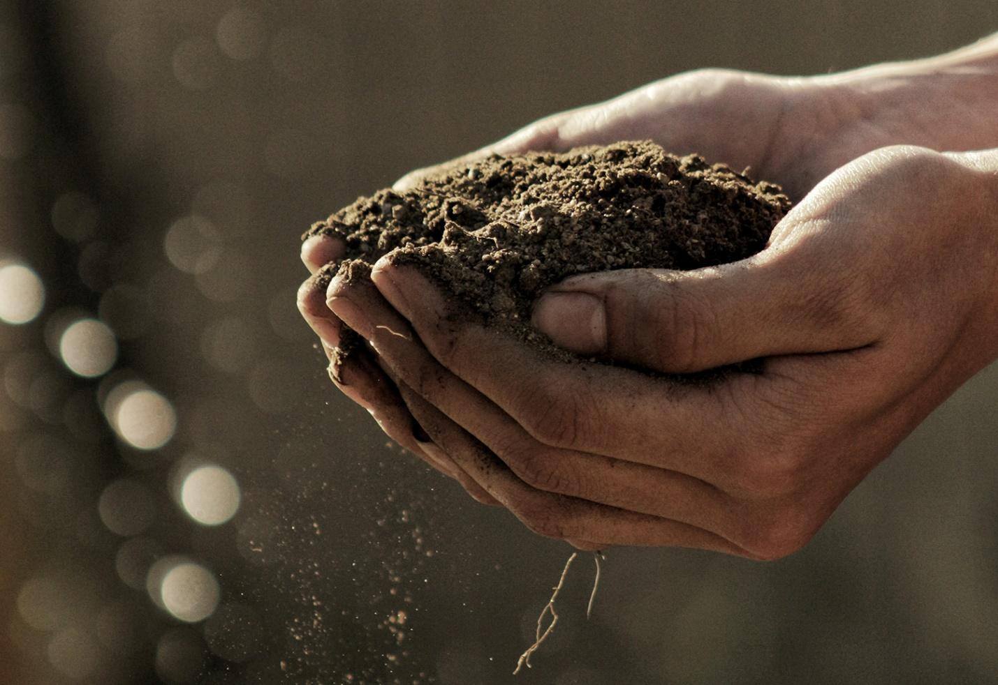 Nutrient rich soil from organic components.