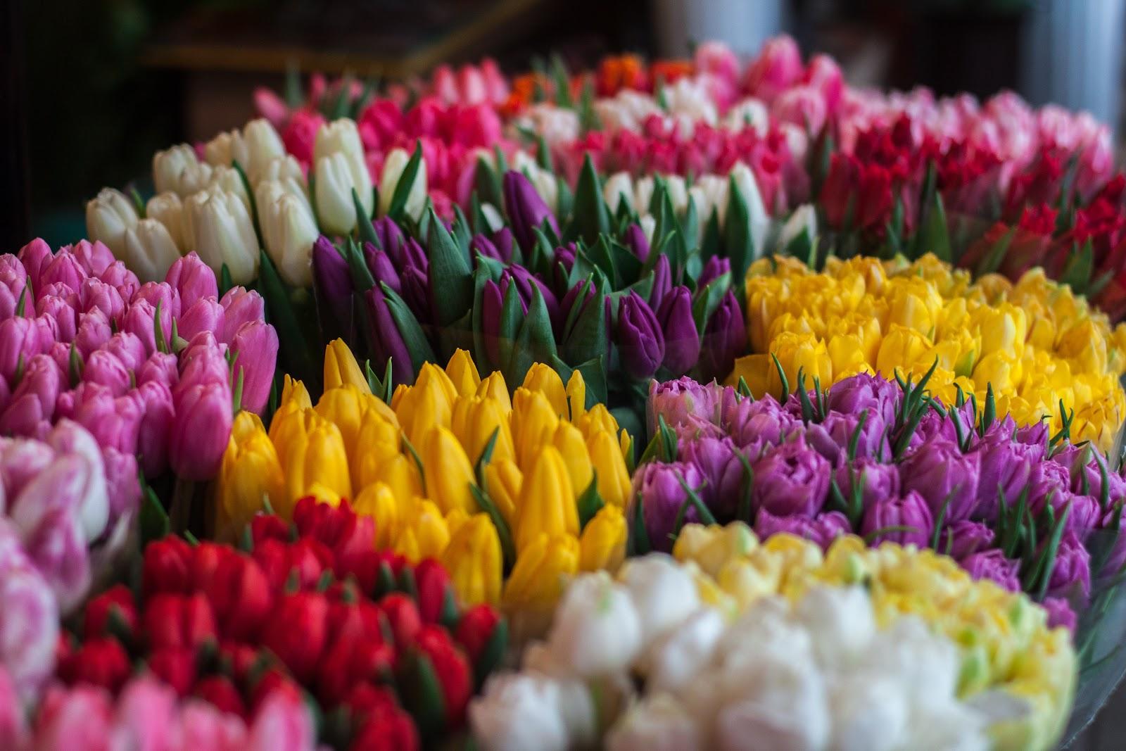 Bright flowers rule summer