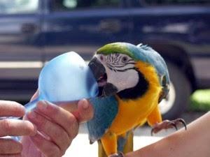 ill-parrot-1-300x225.jpg
