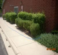 Side bushes of building