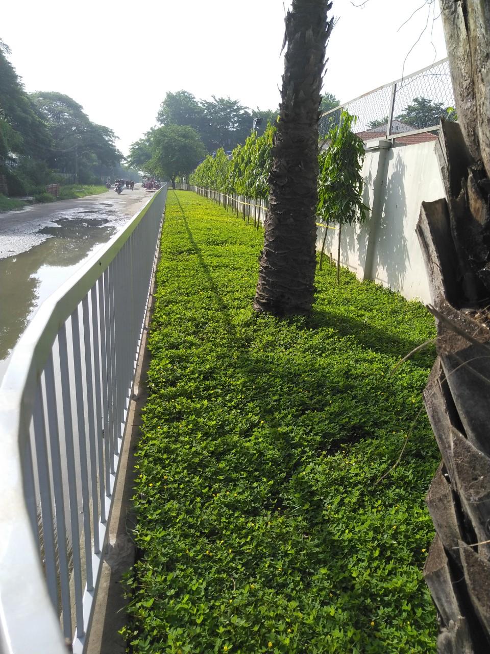 Công ty cũng nhận dịch vụ chăm sóc làm cỏ