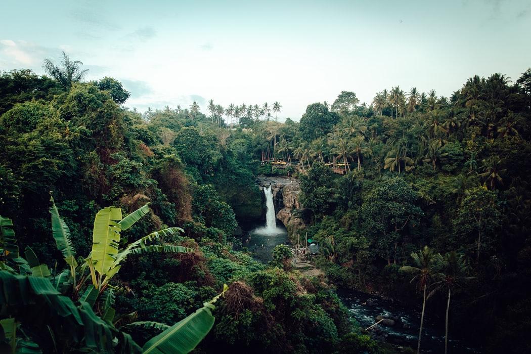 Wer holzt den tropischen Regenwald ab?