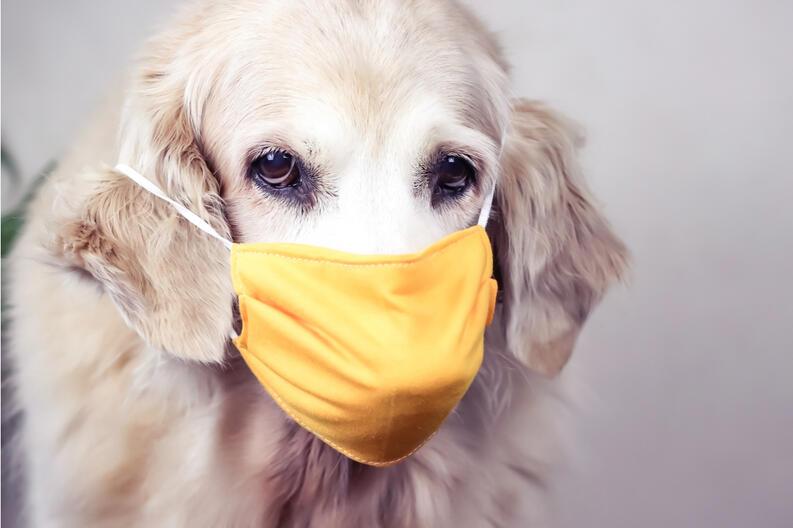 los perros y el coronavirus