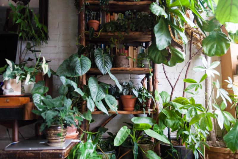 รวม 8 ต้นไม้ปลูกในบ้าน ดูแลง่าย เลี้ยงไม่ยาก ช่วยเพิ่มสีสันและความสดชื่นให้กับบ้าน !   02