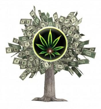 marijuana money tree