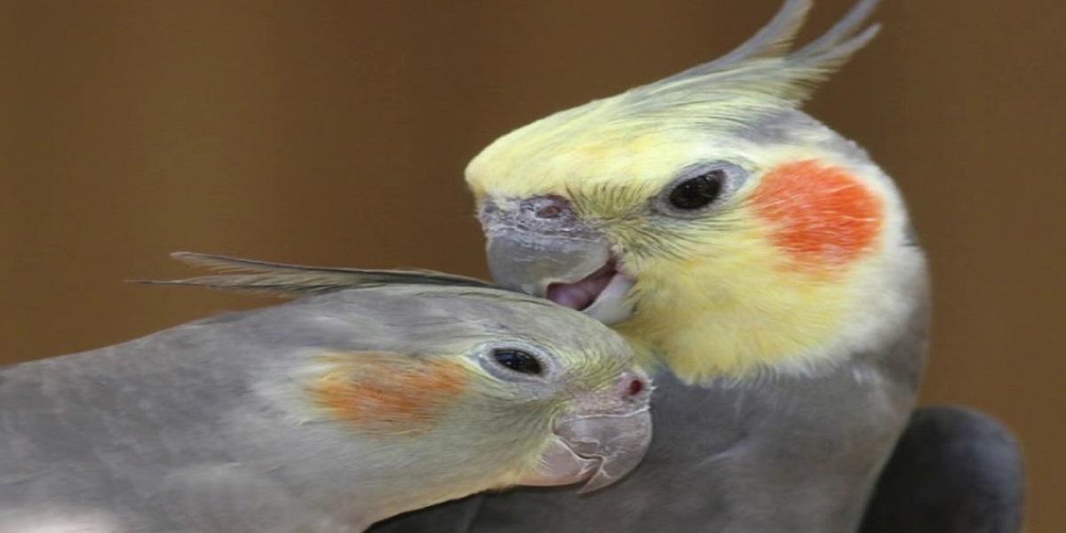 Pássaro com penas coloridas  Descrição gerada automaticamente