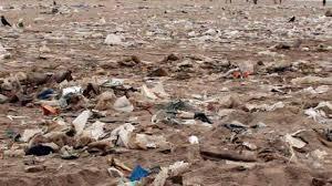 Image result for soil pollution