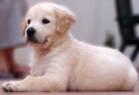 Image result for baby puppies