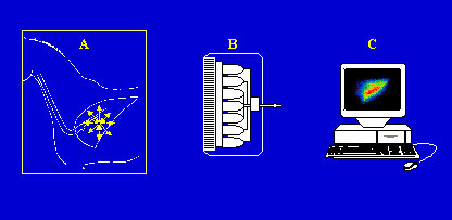 Obtaining a scintigraphical image. Gamma rays emitted by the radiopharmaceutical distributed within the target organ (A) are recorded by a gamma camera (B) linked to a computer (C).