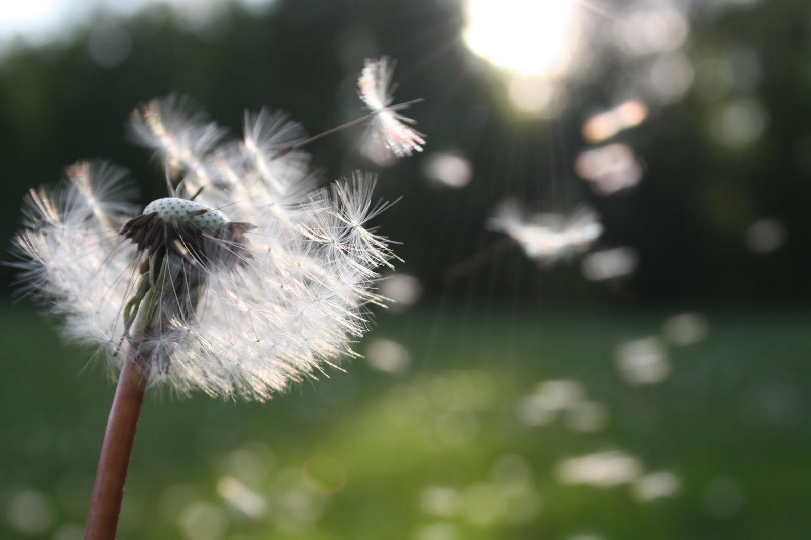Healthy Living - clean air