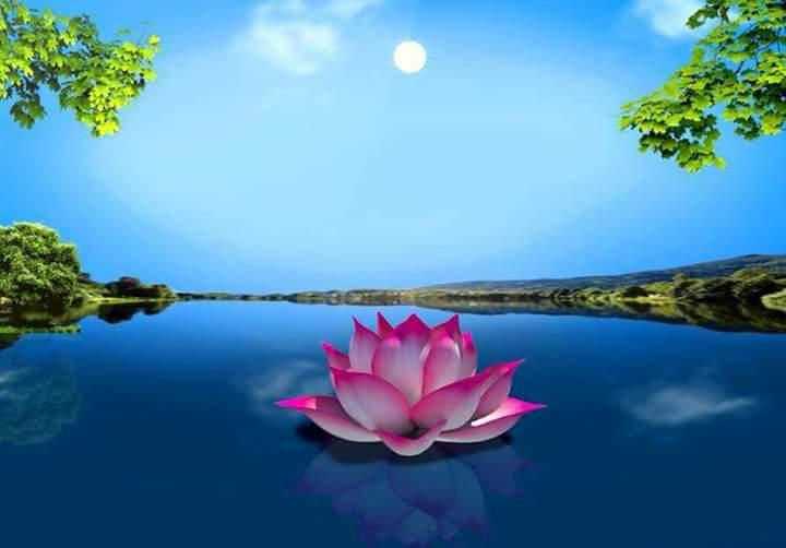 Thơ Thiền (Tuệ Hành Trụ Tọa Ngọa)  - Page 13 3BMqovPr4CMe2d9Tqgb4EYbKIqCjXiI8vlV4vCyDQFITV06MbTJSuxRJzJYG1TNVbwCTRSg4nyMnoX7EQrkEAoxCig4mqz4NIwVWF4k8qm5PVG27zX6lEry-QVIY_bkXK3nm-yec