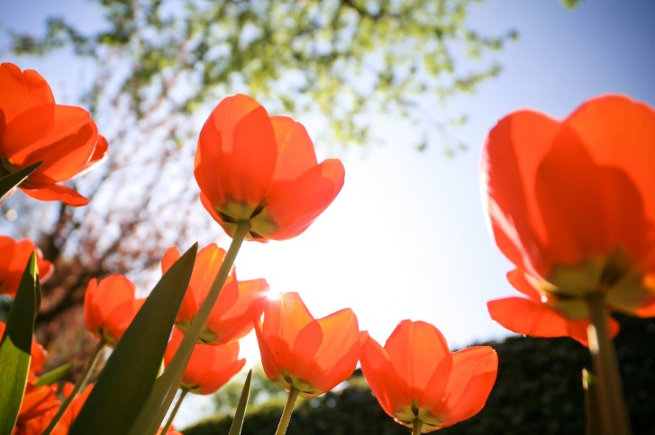 2_La primavera.jpg