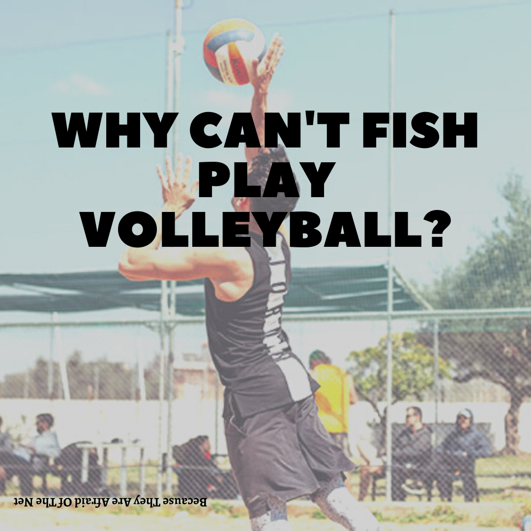 Why can't fish play volleyball?