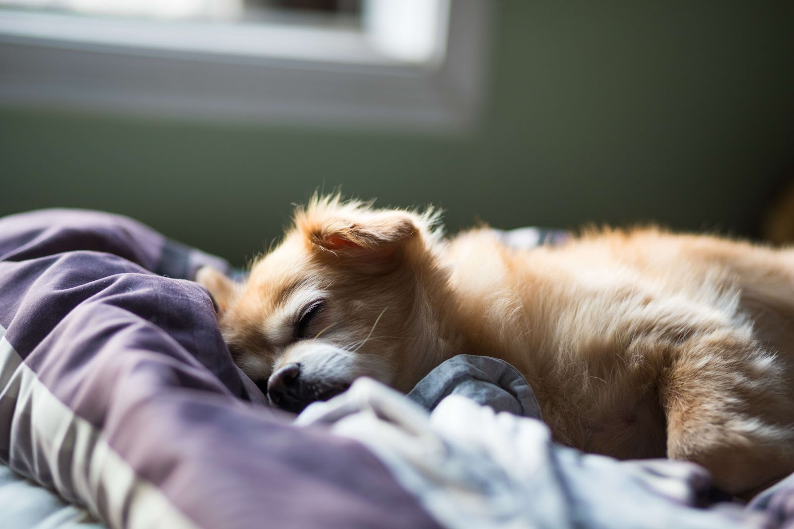 Why Does My Dog Sleep At My Feet?