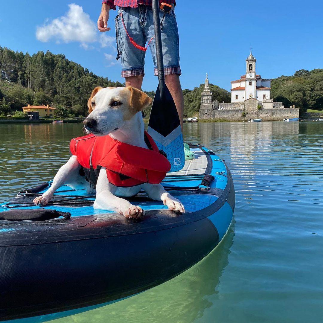 Paddle surf en Llanes con perro
