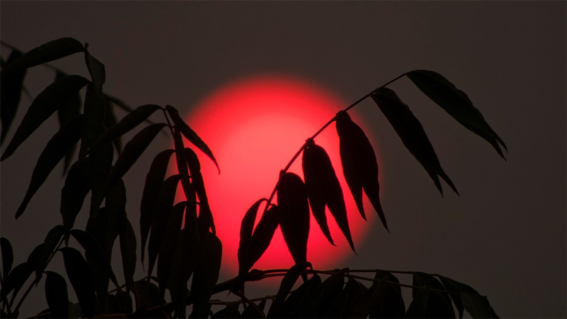 Red Sun And Leaves 7.jpg