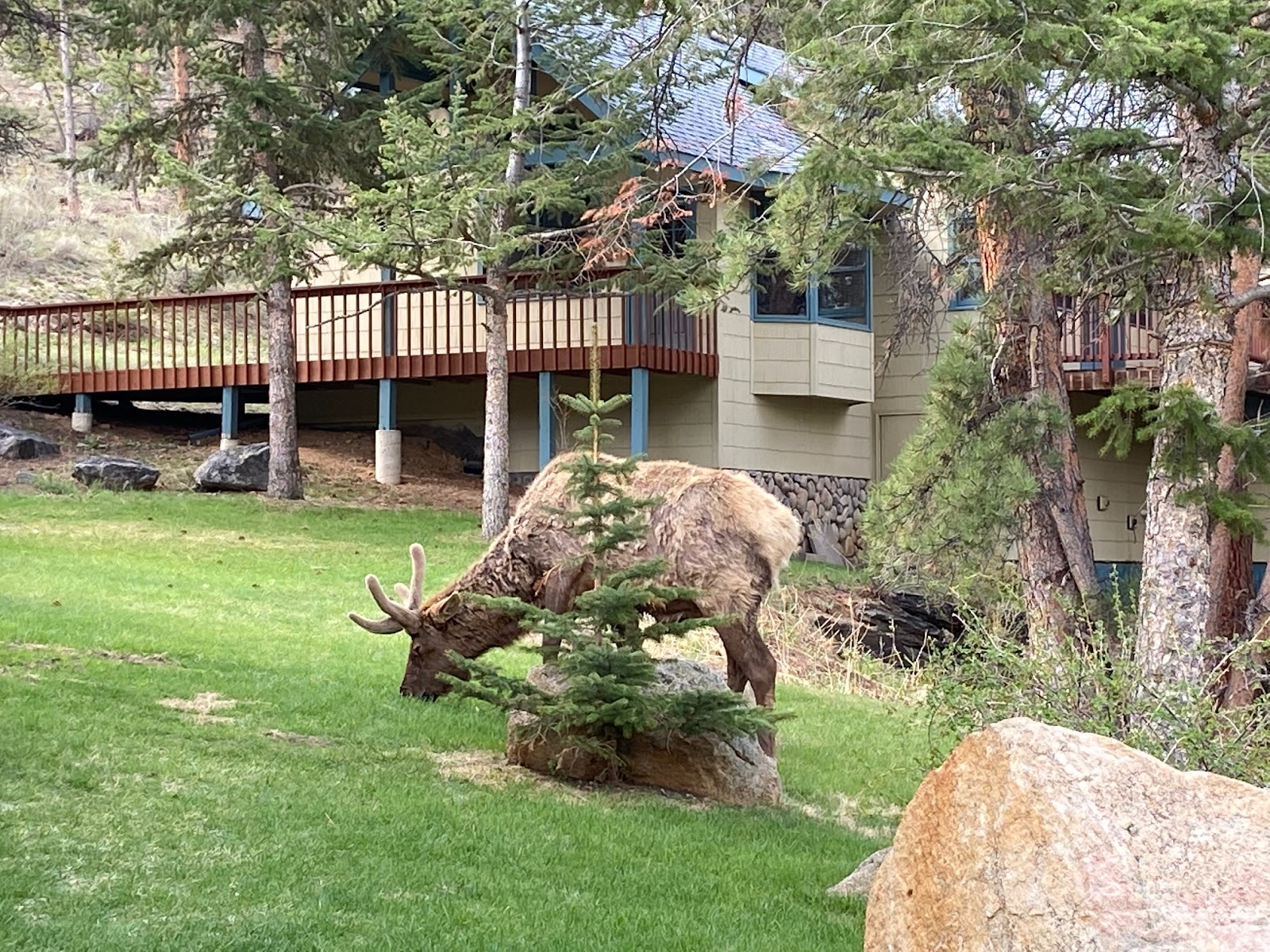 Estes Park Bed and Breakfast, 5 things to ask before checking in!