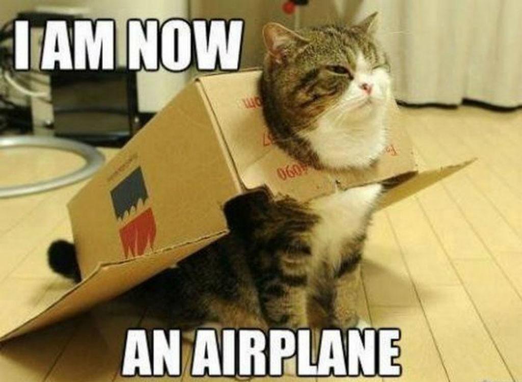 Airplane cat memes