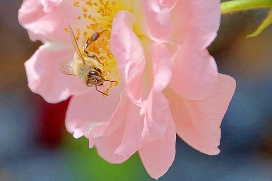 Bee Face 2.jpg