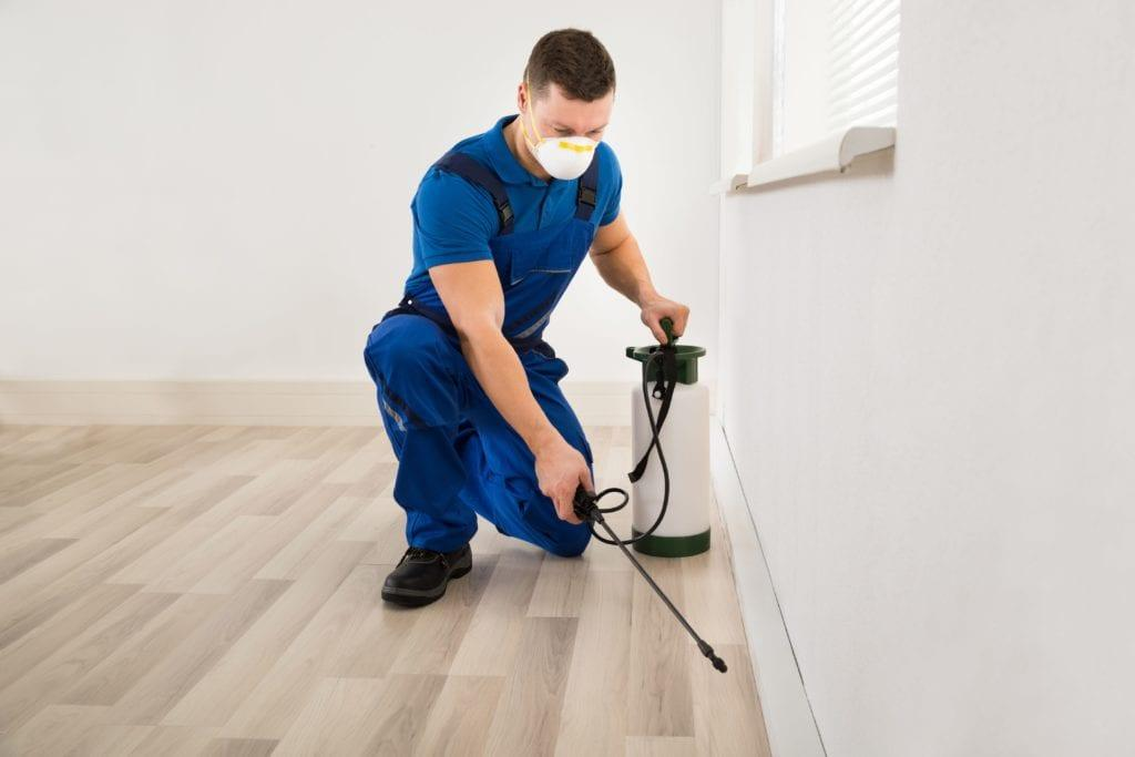 7 Top Pest Control Services of 2021   MYMOVE