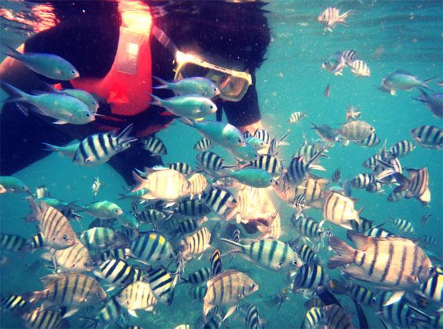 Aktiviti snorkeling di Pulau Perhentian, Terengganu.