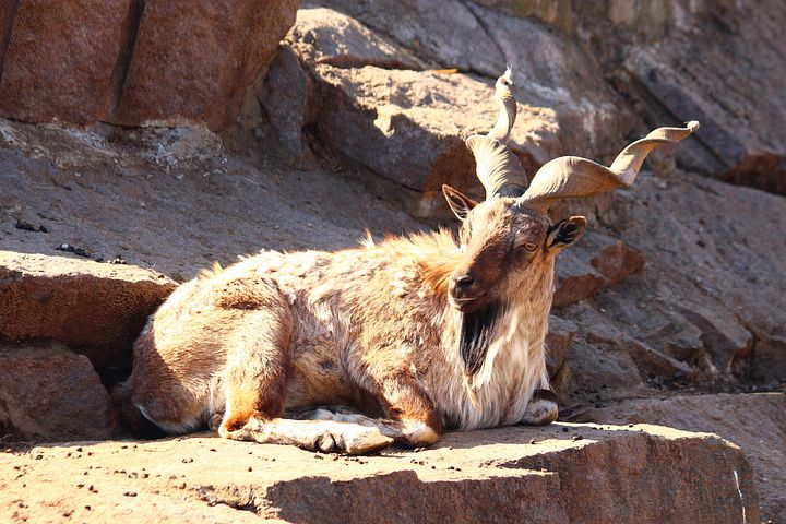 These Animals in Pakistan are at Risk of Extinction