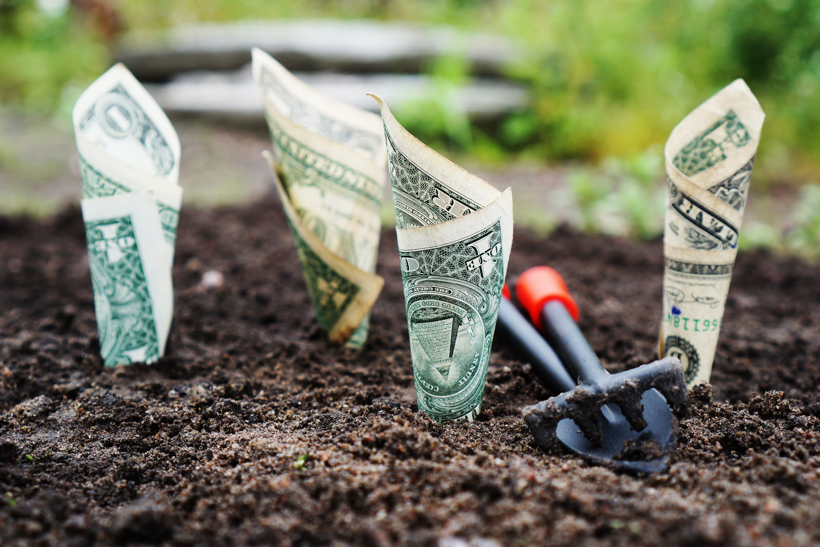 Money growing in a garden.