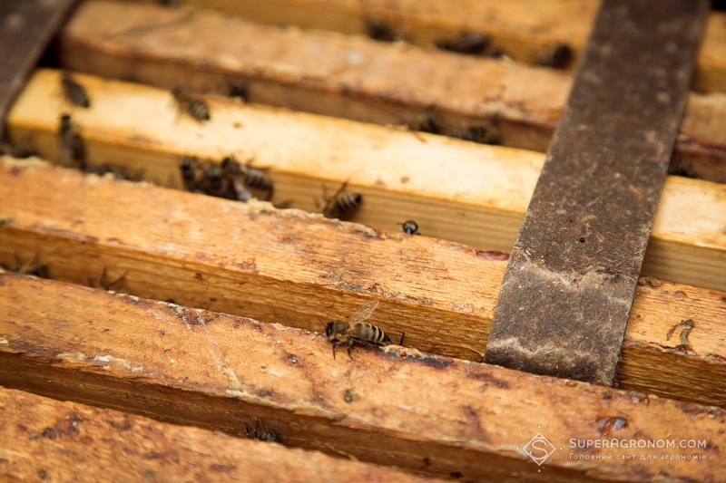 Бджоли vs агрономи: є вихід з протистояння фото 1 LNZ Group