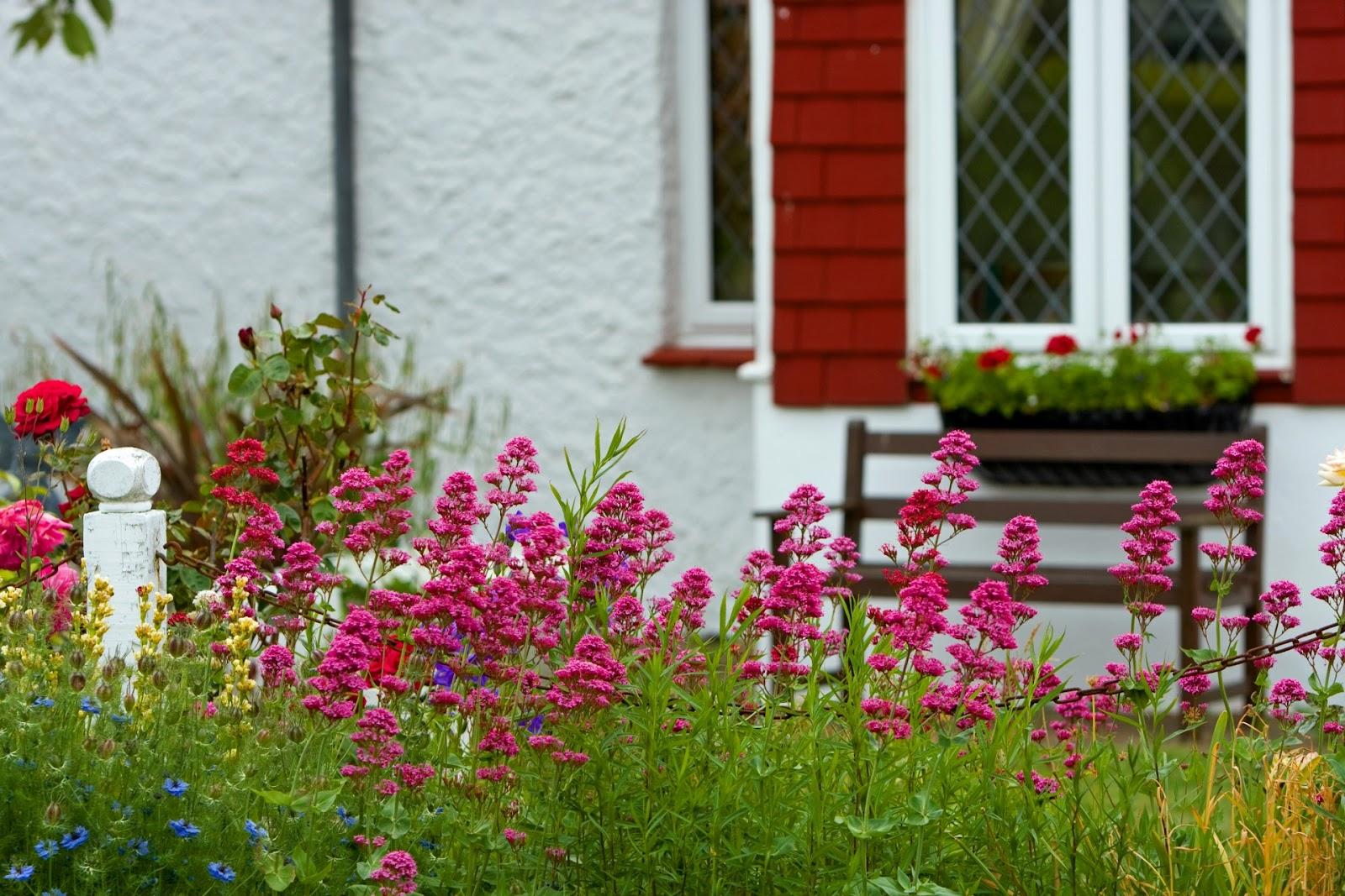 garden pink.jpg