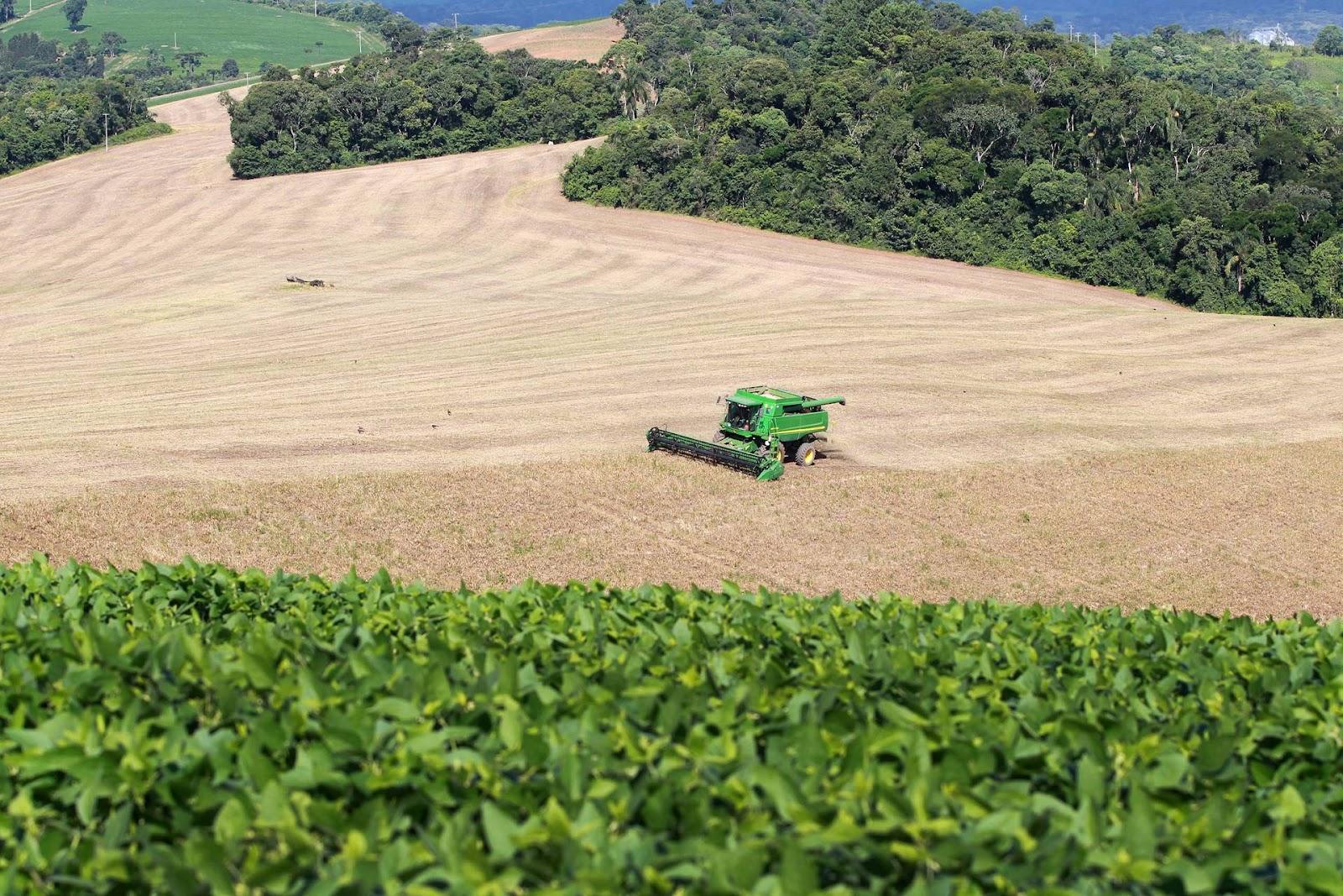 Cerca de 80% das lavouras do segundo ciclo de feijão do Paraná já foram colhidas. (Fonte: Agência Estadual de Notícias do Paraná/Gilson Abreu/Reprodução)