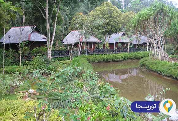 جزیره بورنئو مالزی