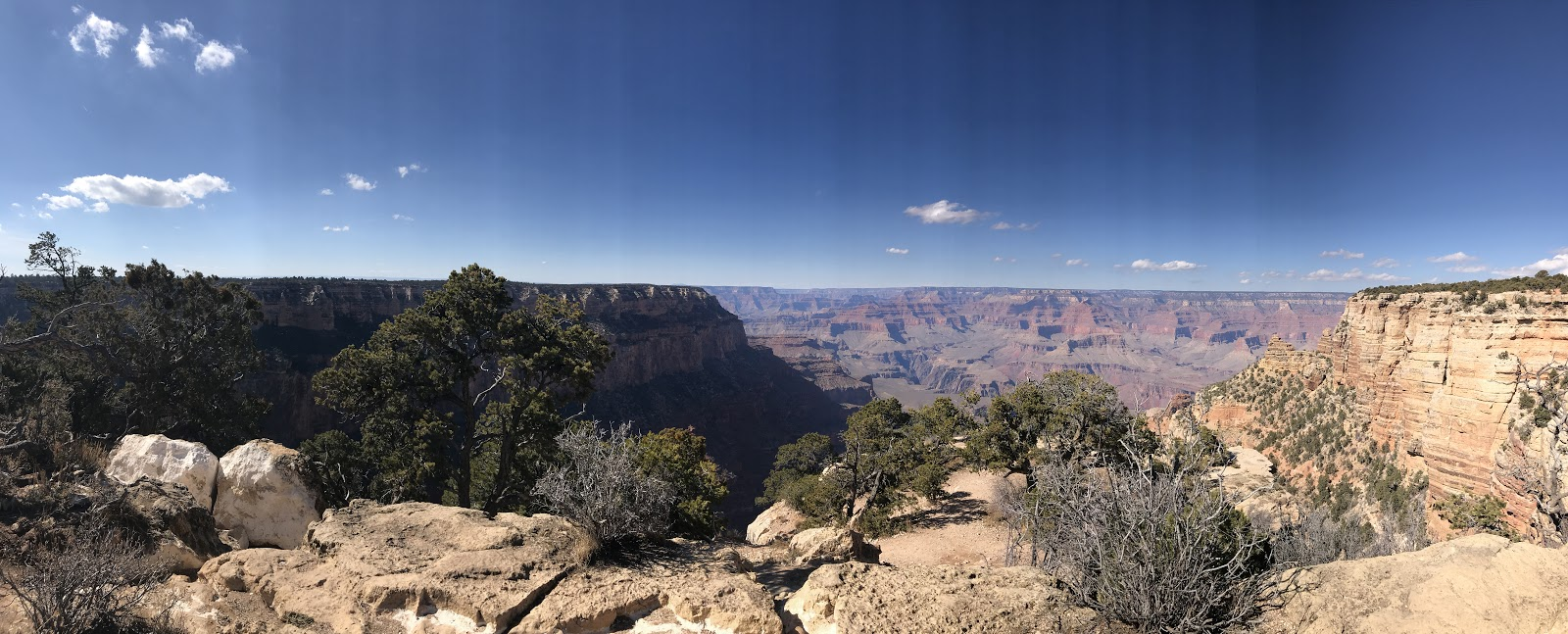 panoramic view of the grand canyon red rock and trees in foreground on a clear sunny day